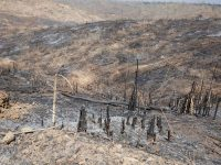 Haiti faces a mass extinction of animals thanks to deforestation