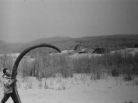 Great, now global warming is causing woolly mammoth poaching