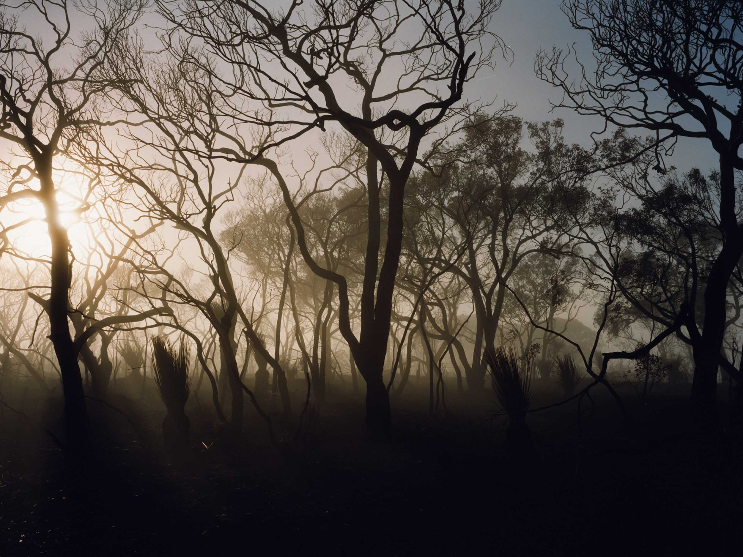 In the Australian outback, a vision of our uncertain future